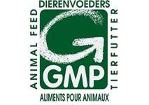 GMP International